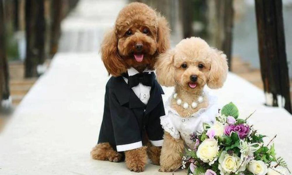 DOG SITTING FOR WEDDING DAYS
